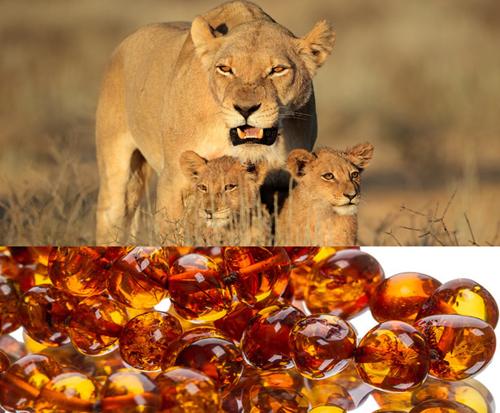 Фото Янтарь подходящий камень для Льва