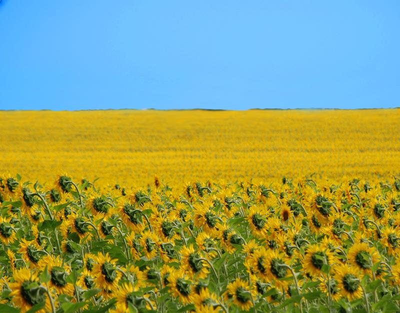 Фото Украинское поле